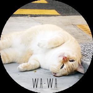 wawa_title